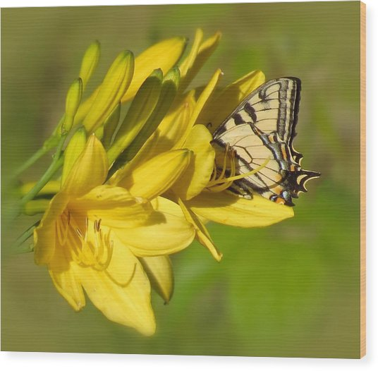 Lily Lover Wood Print