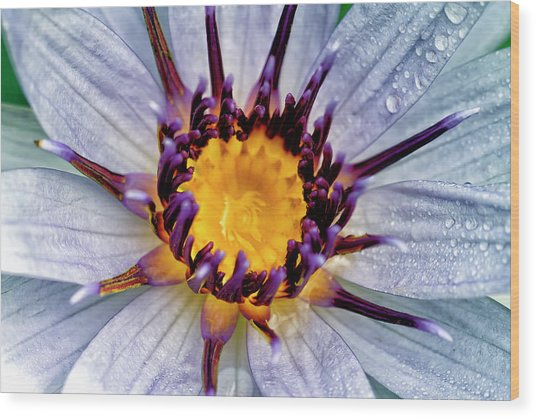 Lily Not Quite In Focus Wood Print