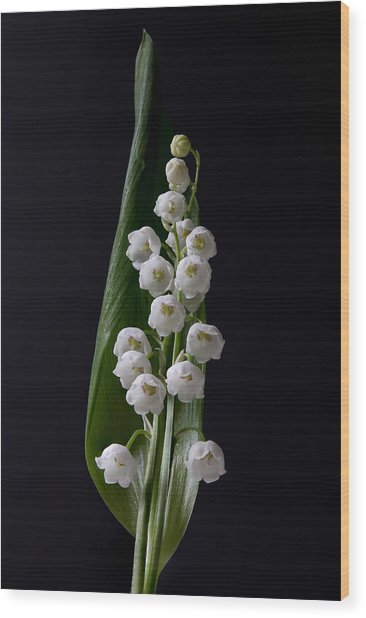 Lily Of The Valley On Black Wood Print