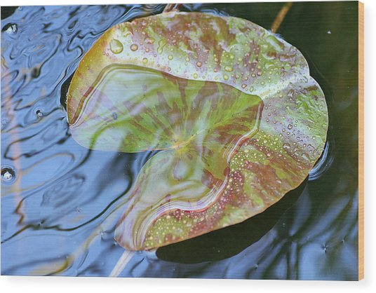 Lily Pad On The Pond Wood Print by Kerry Reed