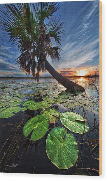 Lily Pads And Sunset Wood Print