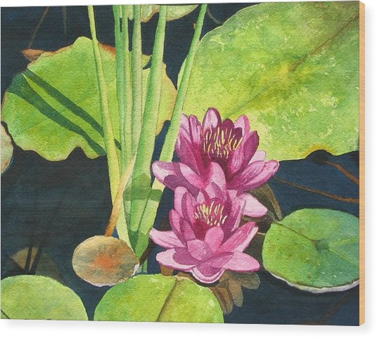 Lily Pads Wood Print by Sharon Farber