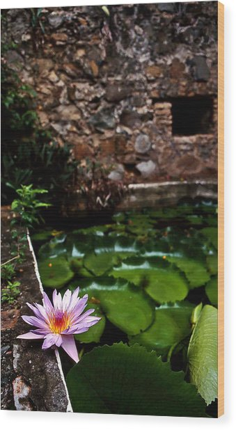 Lily Pond In Ruins. Usvi Wood Print