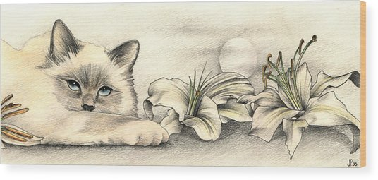Lily The Birman Wood Print