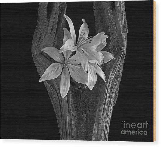 Lily Tree II Wood Print