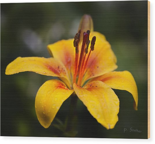 Lily Was Here Wood Print by Patricia Stalter