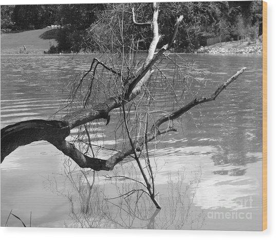 Limb Over Water Wood Print by Angela Christine