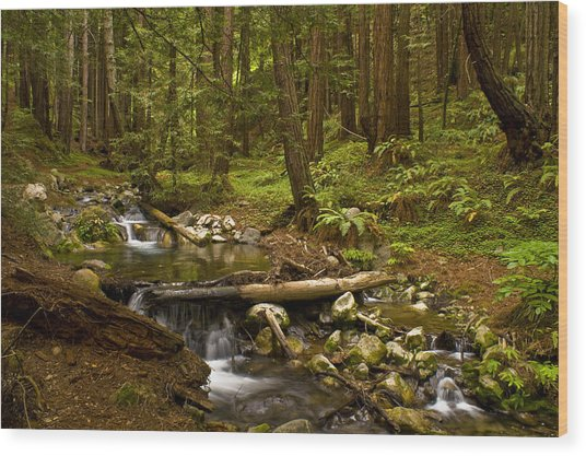 Lime Kiln Creek 1 Wood Print