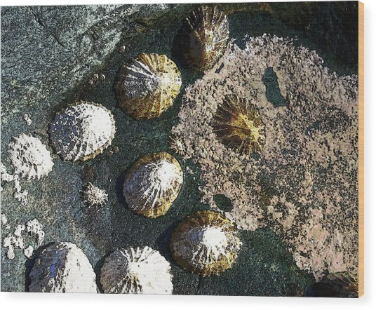 Wood Print featuring the digital art Limpets by Julian Perry