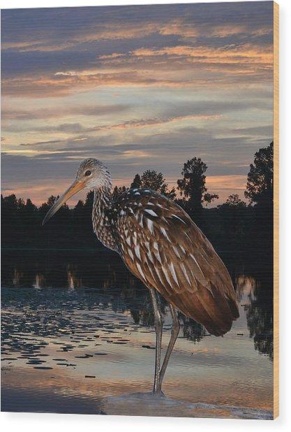 Limpkin - Morning Sunrise Wood Print