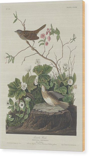 Lincoln Finch Wood Print