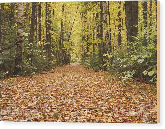 Lincoln Woods Trail  - White Mountains New Hampshire Wood Print