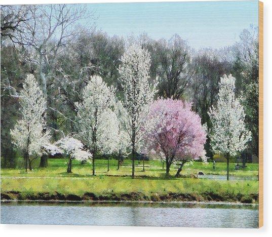 Line Of Flowering Trees Wood Print by Susan Savad