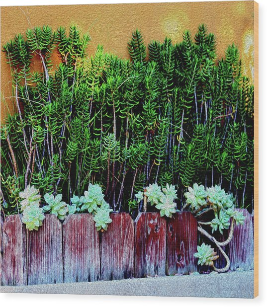 Line Of Succulents And Red Fence Wood Print