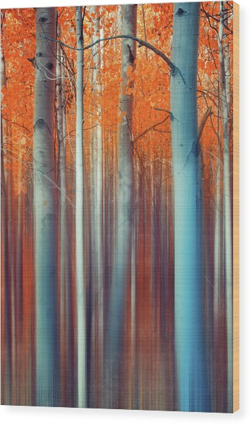 Lines Of Autumn Wood Print