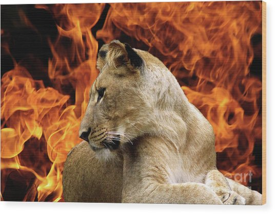 Lion And Fire Wood Print