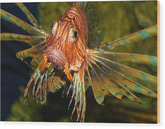 Lion Fish 2 Wood Print