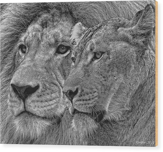Lion King And Queen Wood Print