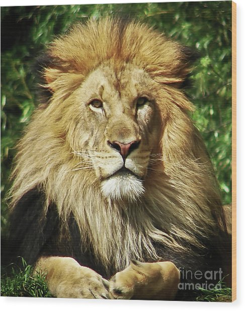 Lion King Wood Print by Cathy Mounts