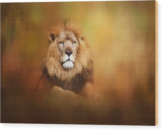 Lion - Pride Of Africa I - Tribute To Cecil Wood Print