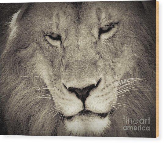 Lion Wood Print by Tonya Laker