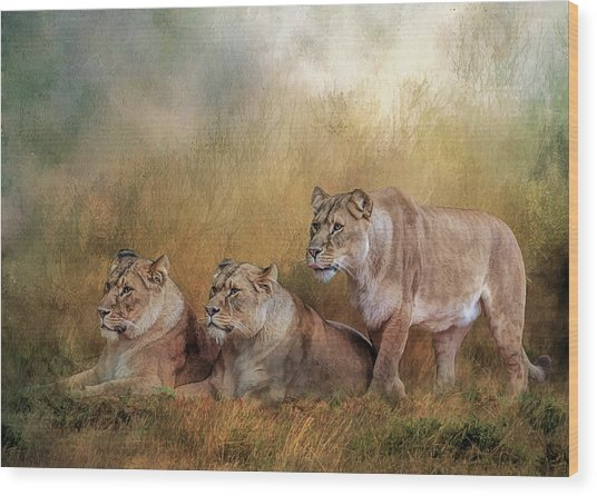 Lionesses Watching The Herd Wood Print