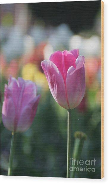 Lit Tulip 05 Wood Print