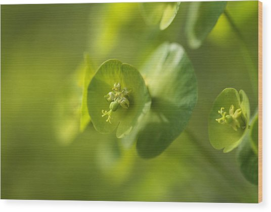 Green Power Wood Print