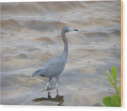Little Blue Heron Wood Print by Jeanette Oberholtzer