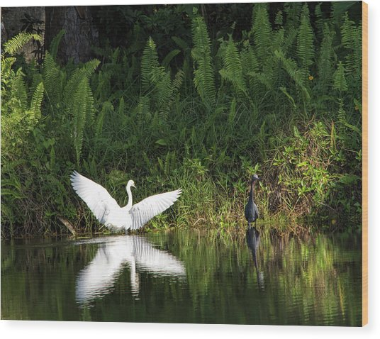 Little Blue Heron Non-impressed Wood Print