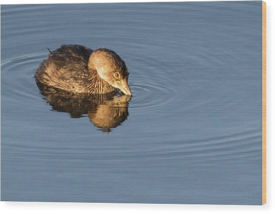 Little Brown Duck Wood Print