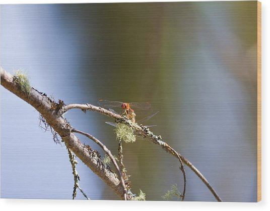 Little Dragonfly Wood Print by Gary Smith