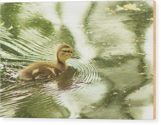 Green Duck Wood Print