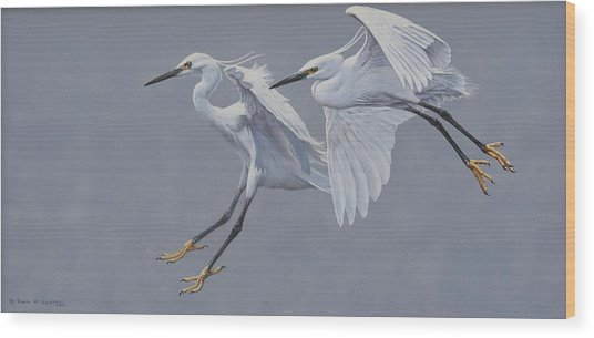 Little Egrets In Flight Wood Print