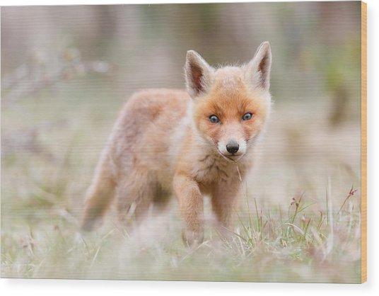 Little Fox Kit, Big World Wood Print