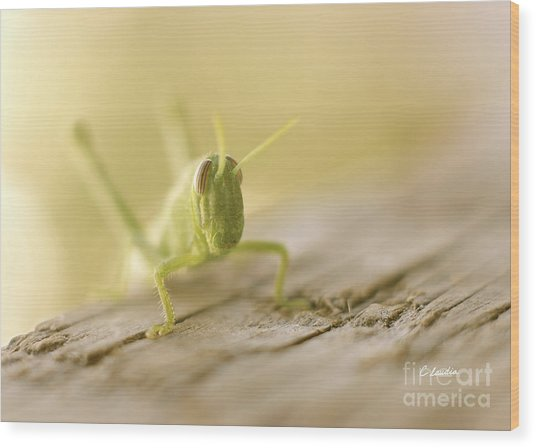 Little Grasshopper Wood Print