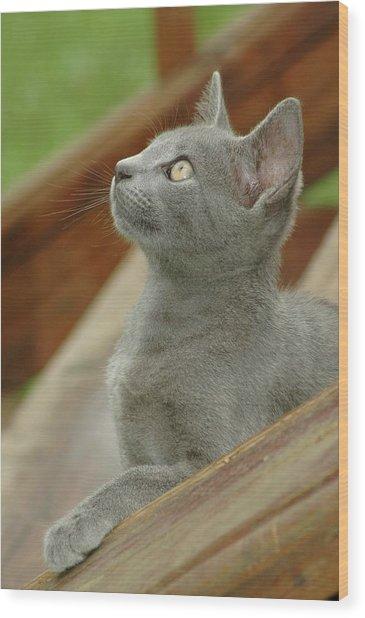 Little Gray Kitty Cat Wood Print