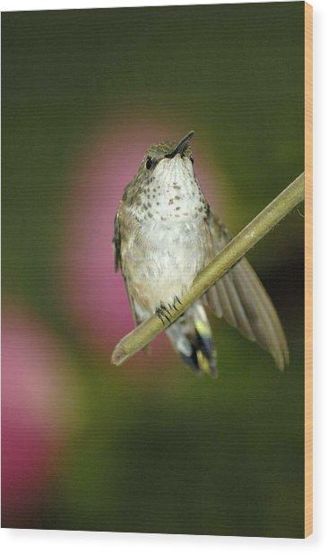 Little Humming Bird Wood Print
