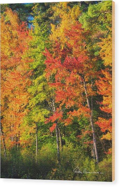 Little Lake Foliage 0515 Wood Print