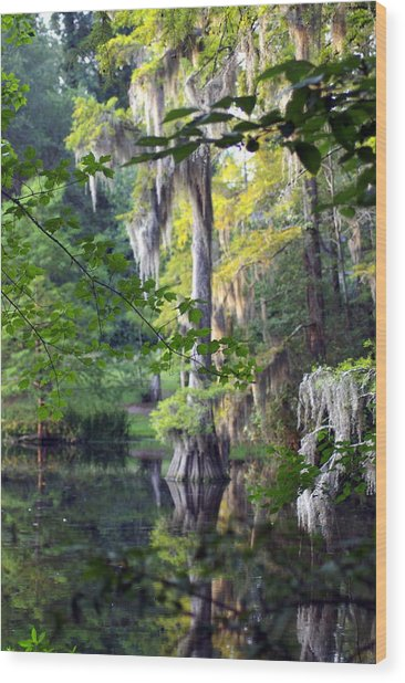 Little Moss Wood Print by Don Prioleau