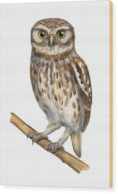 Little Owl Or Minerva's Owl Athene Noctua - Goddess Of Wisdom- Chouette Cheveche- Nationalpark Eifel Wood Print