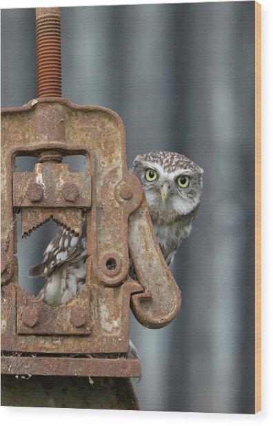 Little Owl Peeking Wood Print