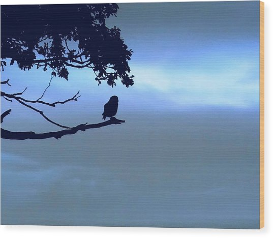 Little Owl Watching Wood Print