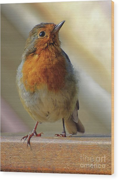 Little Robin Redbreast Wood Print