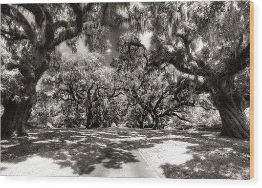 Live Oak Allee Infrared Wood Print