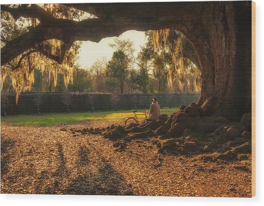 Live Oak At Audubon Park Wood Print