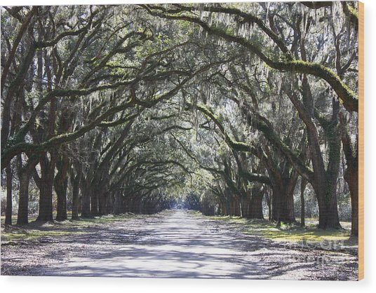 Live Oak Lane In Savannah Wood Print