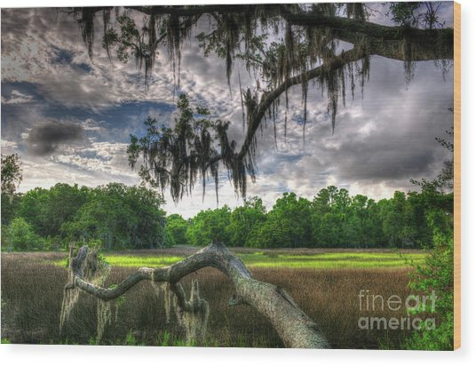 Live Oak Marsh View Wood Print