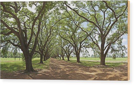 Live Oaks Country Road Wood Print