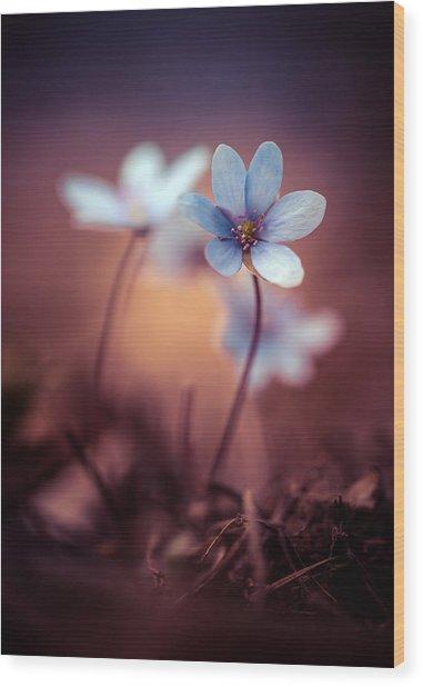 Liverworts Wood Print